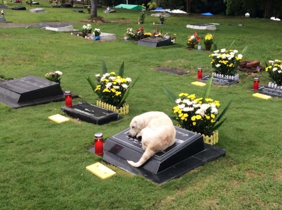 Фотография собаки, лежащей на могиле